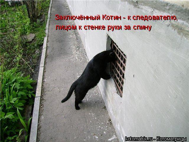 Котоматрица: Заключённый Котин - к следователю,  лицом к стенке руки за спину