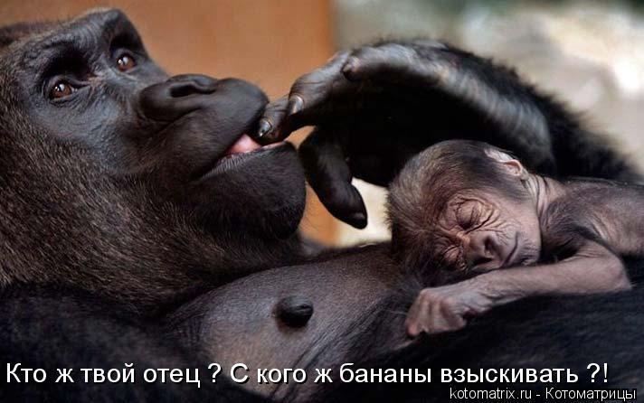 Котоматрица: Кто ж твой отец ? С кого ж бананы взыскивать ?!