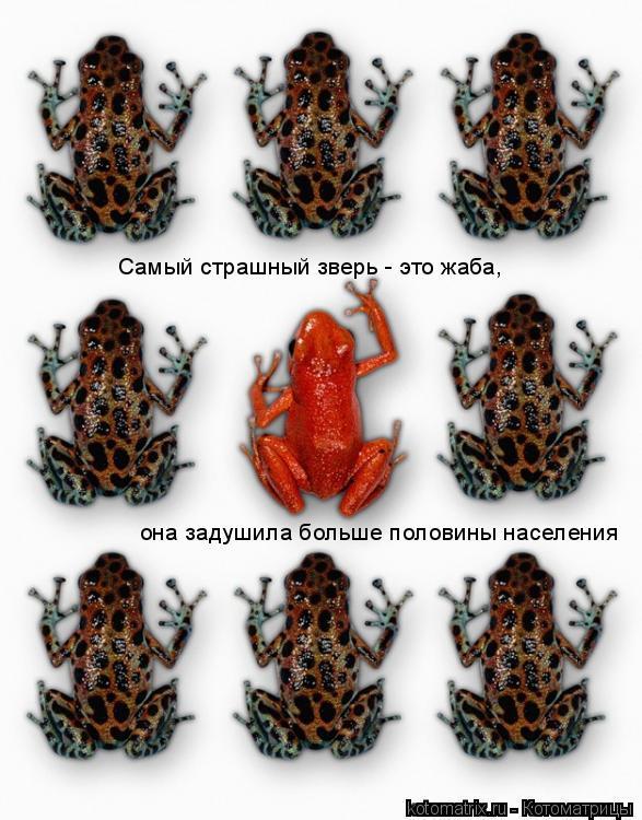 Котоматрица: Самый страшный зверь - это жаба,  она задушила больше половины населения