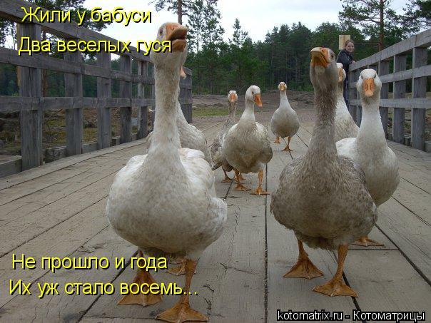 Котоматрица: Жили у бабуси Два веселых гуся Не прошло и года Их уж стало восемь...