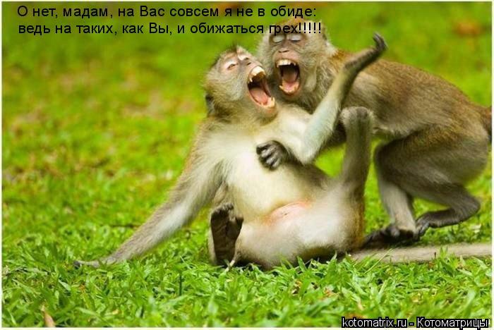 Котоматрица: О нет, мадам, на Вас совсем я не в обиде:  ведь на таких, как Вы, и обижаться грех!!!!!