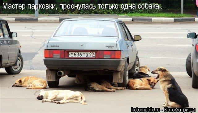 Котоматрица: Мастер парковки, проснулась только одна собака...