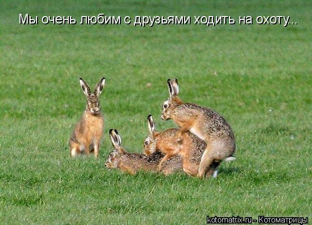 Котоматрица: Мы очень любим с друзьями ходить на охоту...