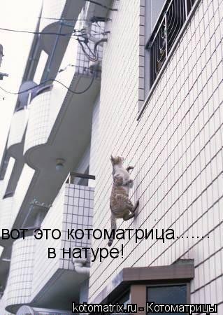 Котоматрица: вот это котоматрица в натуре! .......
