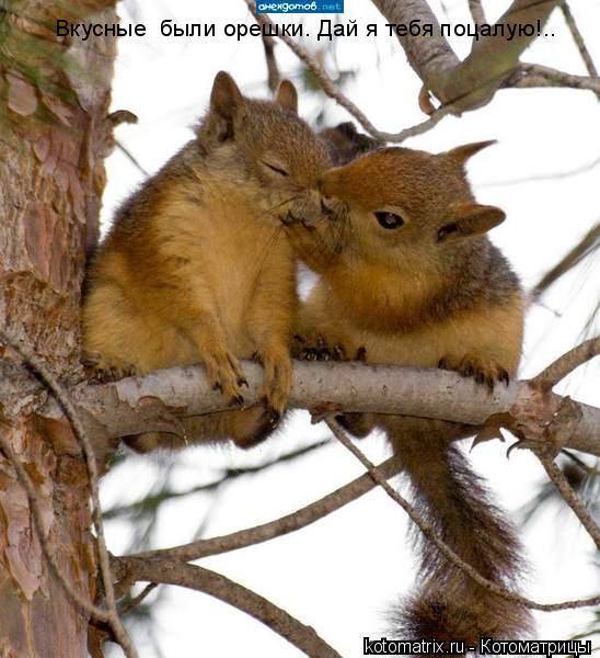 Котоматрица: Вкусные  были орешки. Дай я тебя поцалую!..
