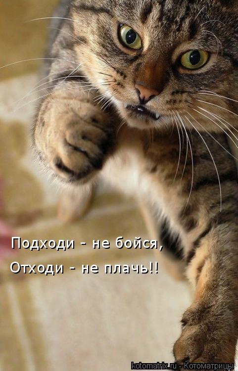 Котоматрица: Подходи - не бойся, Отходи - не плачь!!