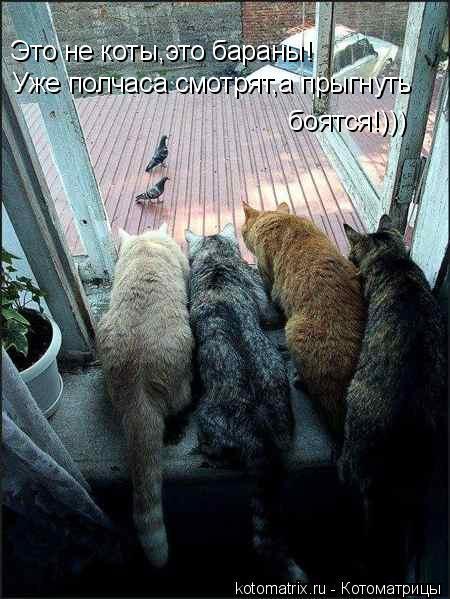 Котоматрица: Это не коты,это бараны! Уже полчаса смотрят,а прыгнуть  боятся!)))