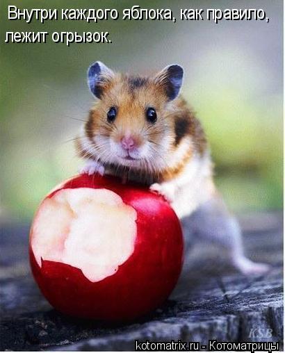 Котоматрица: Внутри каждого яблока, как правило,  лежит огрызок.