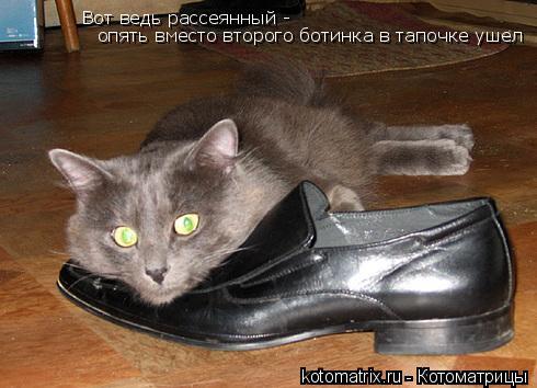 Котоматрица: Вот ведь рассеянный -  опять вместо второго ботинка в тапочке ушел