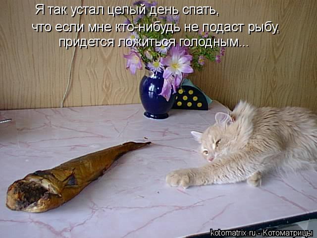 Котоматрица: Я так устал целый день спать,  что если мне кто-нибудь не подаст рыбу, придется ложиться голодным...