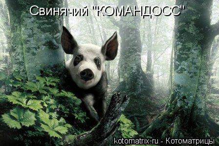 "Котоматрица: Свинячий ""КОМАНДОСС"""