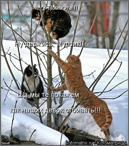 Котоматрица: Ну держись, Мурзик!! Помогите!!! Ща мы те покажем  как наших девок отбивать!!!