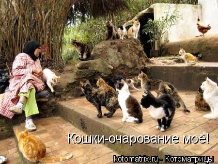 Котоматрица: Кошки-очарование моё!