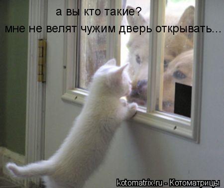 Котоматрица: а вы кто такие?  мне не велят чужим дверь открывать...