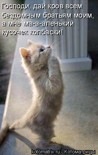Котоматрица: Господи, дай кров всем  бездомным братьям моим, а мне ма-а-аленький  кусочек колбаски!