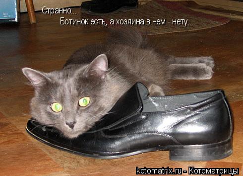 Котоматрица: Странно...  Ботинок есть, а хозяина в нем - нету...