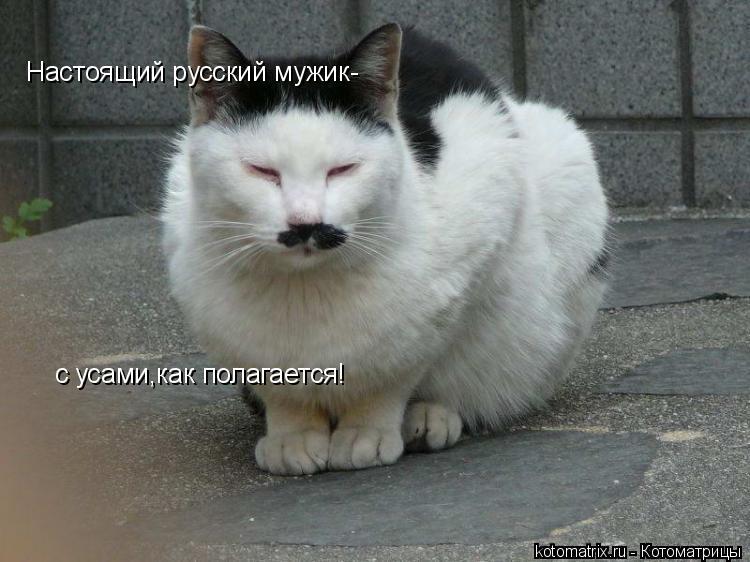 Котоматрица: Настоящий русский мужик- с усами,как полагается!