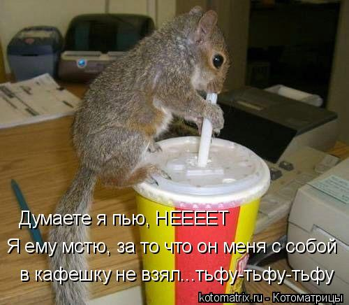 Котоматрица: Думаете я пью, НЕЕЕЕТ Я ему мстю, за то что он меня с собой  в кафешку не взял...тьфу-тьфу-тьфу