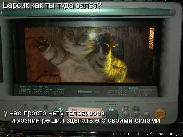 Котоматрица: Барсик как ты туда залез? у нас просто нету телевизора  и хозяин решил зделать его своими силами