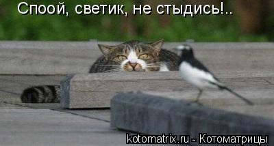 Котоматрица: Споой, светик, не стыдись!..