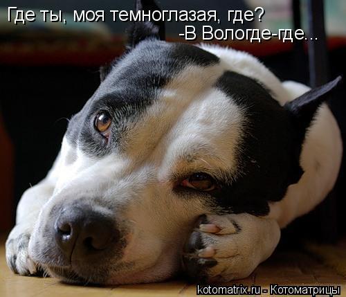 Котоматрица: Где ты, моя темноглазая, где? -В Вологде-где...