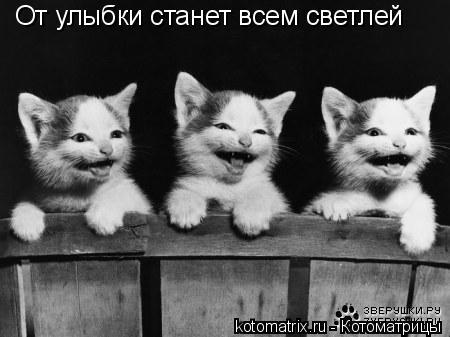 Котоматрица: От улыбки станет всем светлей