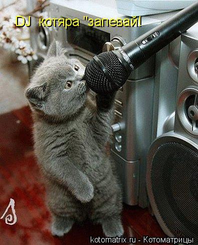 """Котоматрица: DJ  котяра """"запевай!"""