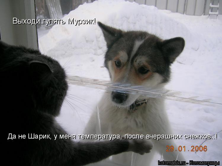 Котоматрица: Да не Шарик, у меня температура, после вчерашних снежков..! Выходи гулять Мурзик!