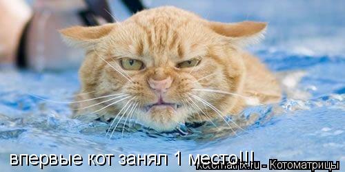 Котоматрица: впервые кот занял 1 место!!!