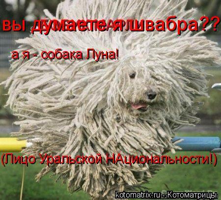 Котоматрица: вы думаете я швабра??!! а я - собака Луна! (Лицо Уральской НАциональности!)
