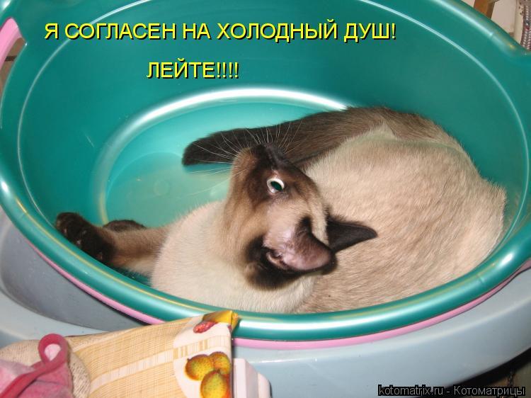 Котоматрица: Я СОГЛАСЕН НА ХОЛОДНЫЙ ДУШ!  ЛЕЙТЕ!!!!
