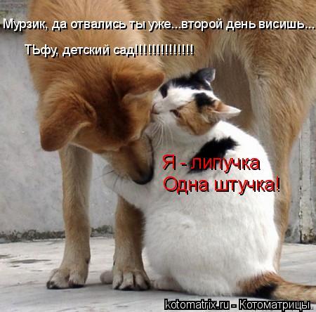 Котоматрица: Я - липучка Одна штучка! Мурзик, да отвались ты уже...второй день висишь..... ТЬфу, детский сад!!!!!!!!!!!!!!