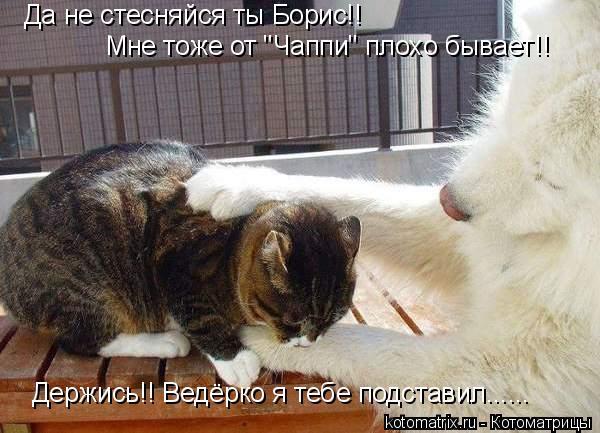 """Котоматрица: Да не стесняйся ты Борис!! Мне тоже от """"Чаппи"""" плохо бывает!! Держись!! Ведёрко я тебе подставил......"""