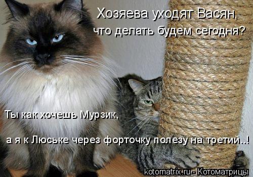 Котоматрица: Хозяева уходят Васян, что делать будем сегодня? а я к Люське через форточку полезу на третий..! Ты как хочешь Мурзик,