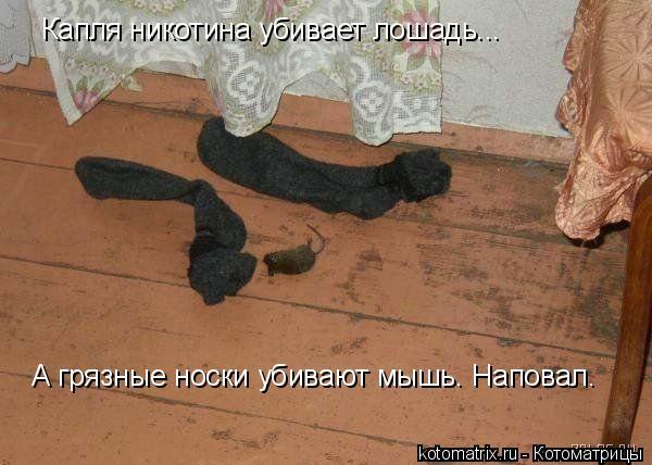 Котоматрица: Капля никотина убивает лошадь... А грязные носки убивают мышь. Наповал.