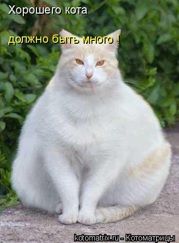 Котоматрица: Хорошего кота должно быть много !