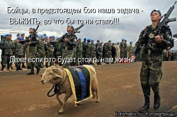 Котоматрица: Бойцы, в предстоящем бою наша задача -   ВЫЖИТЬ, во что бы то ни стало!!! Даже если это будет стоить нам жизни ....