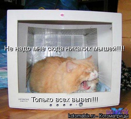 Котоматрица: Не надо мне сюда никаких мышей!!!! Только всех вывел!!!