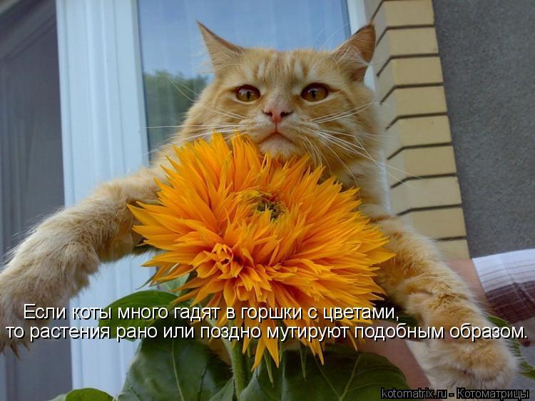 Котоматрица: Если коты много гадят в горшки с цветами, то растения рано или поздно мутируют подобным образом.