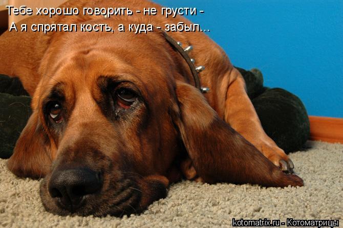 Котоматрица: Тебе хорошо говорить - не грусти - А я спрятал кость, а куда - забыл...