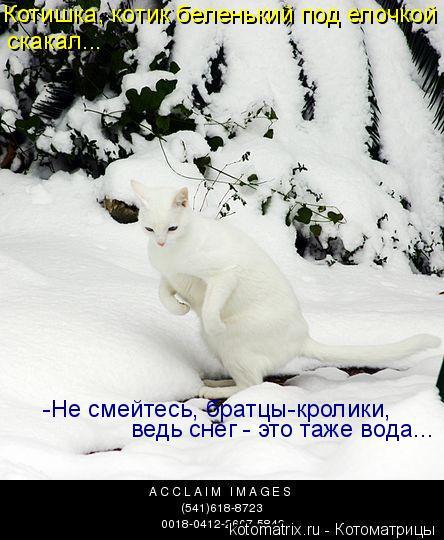 Котоматрица: Котишка, котик беленький под елочкой  скакал... -Не смейтесь, братцы-кролики, ведь снег - это таже вода...