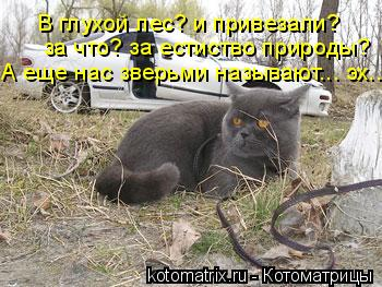 Котоматрица: В глухой лес? и привезали? за что? за естиство природы? А еще нас зверьми называют... эх...
