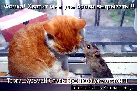 Котоматрица: Фомка! Хватит мне уже брови выгрызать!!! Терпи, Кузьма!! Стиль Брежнева уже отстой!!!