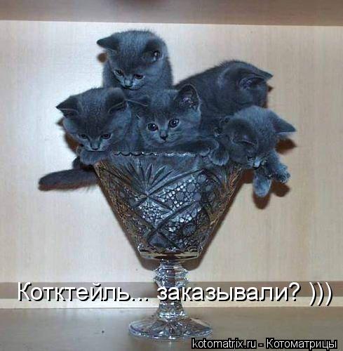 Котоматрица: Котктейль... заказывали? )))