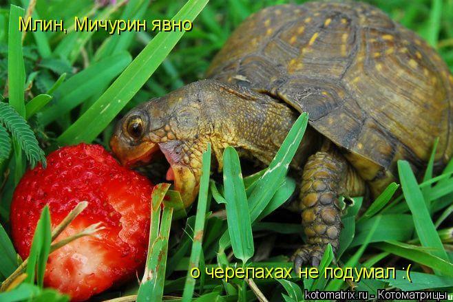 Котоматрица: Млин, Мичурин явно о черепахах не подумал :(