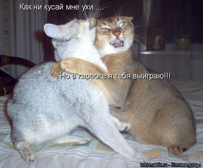 Котоматрица: Как ни кусай мне ухи..... Но в караоке я тебя выиграю!!!