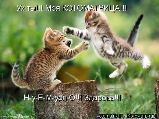 Котоматрица: Ух ты!!! Моя КОТОМАТРИЦА!!!  Н-у-Е-М-урл-О!!! Здарова!!!!