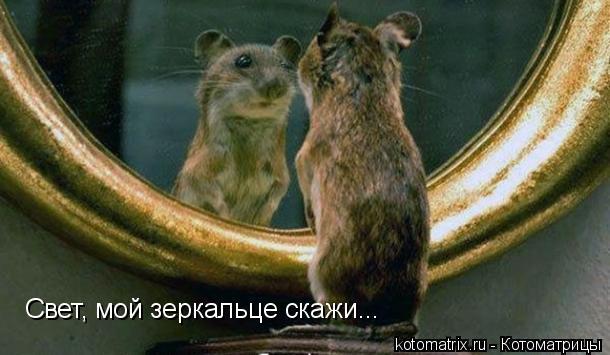 Котоматрица: Свет, мой зеркальце скажи...