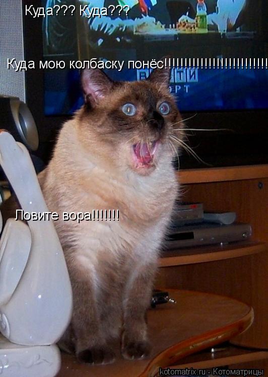 Котоматрица: Куда??? Куда??? Куда мою колбаску понёс!!!!!!!!!!!!!!!!!!!!!!!!!!!!! Ловите вора!!!!!!!