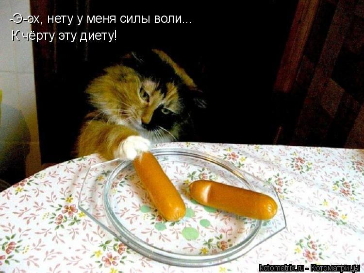Котоматрица: -Э-эх, нету у меня силы воли... К чёрту эту диету!